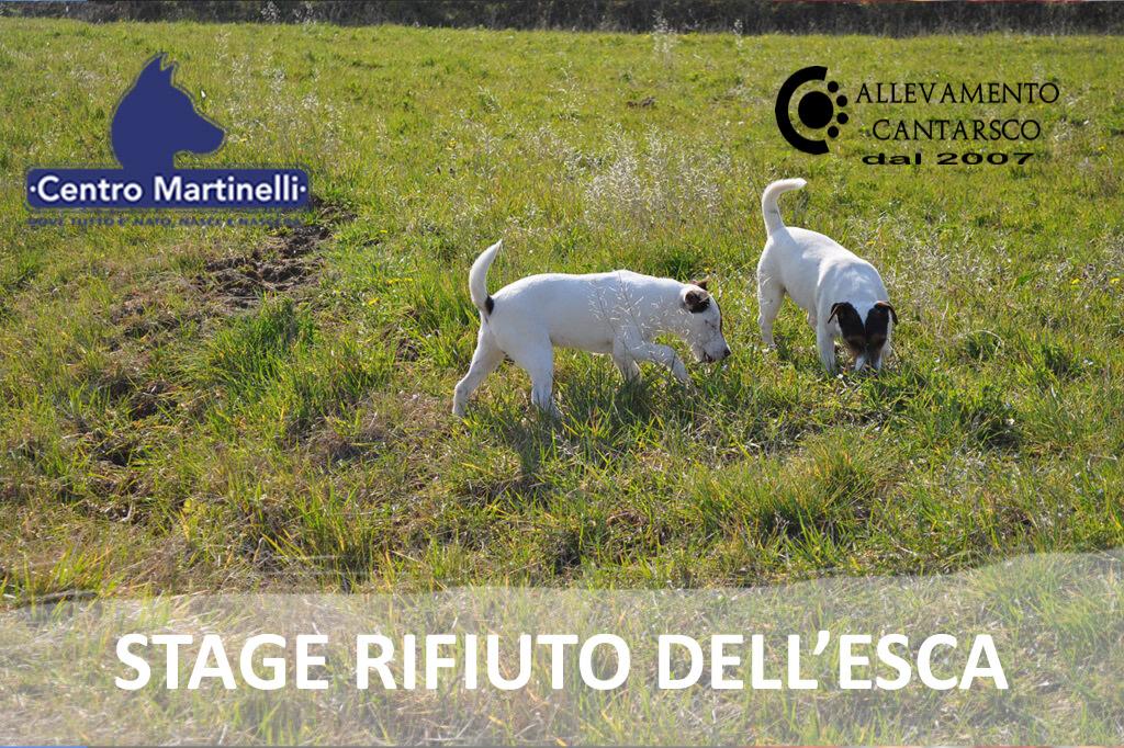 STAGE RIFIUTO DELL'ESCA